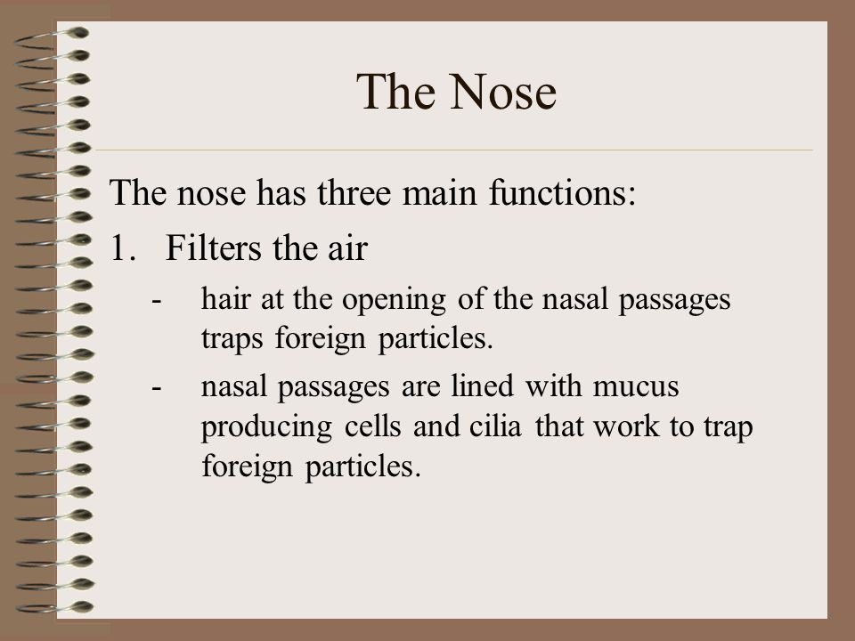 The Nose The nose has three main functions: Filters the air