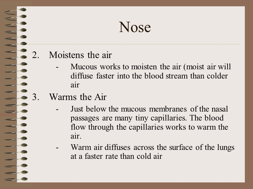 Nose Moistens the air Warms the Air