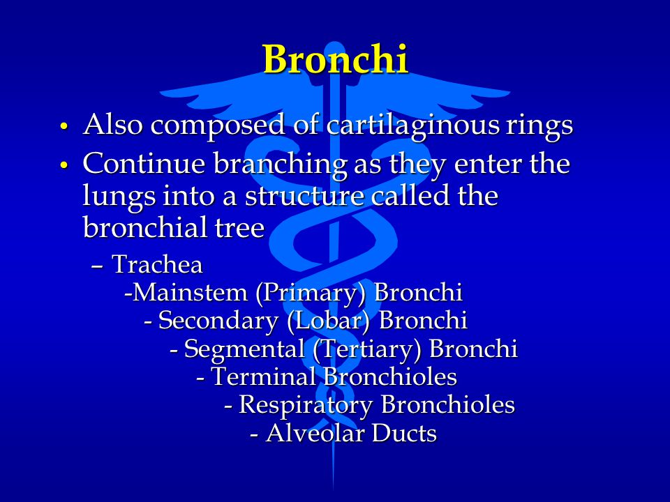 Bronchi Also composed of cartilaginous rings