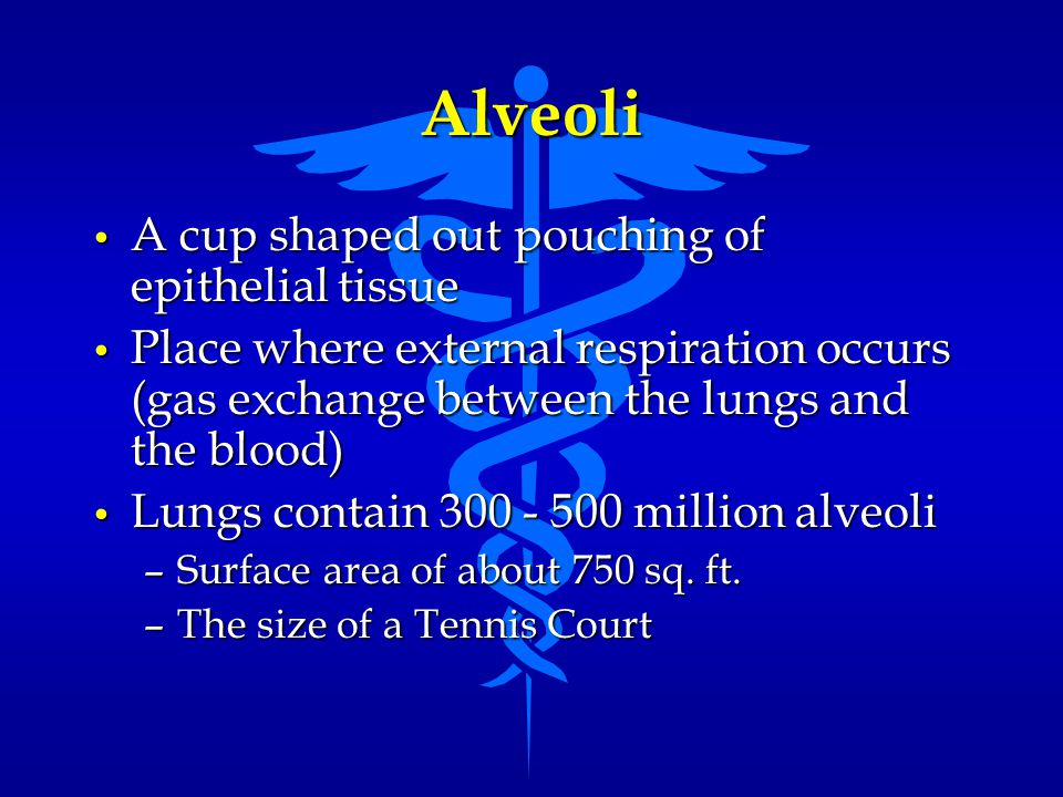 Alveoli A cup shaped out pouching of epithelial tissue