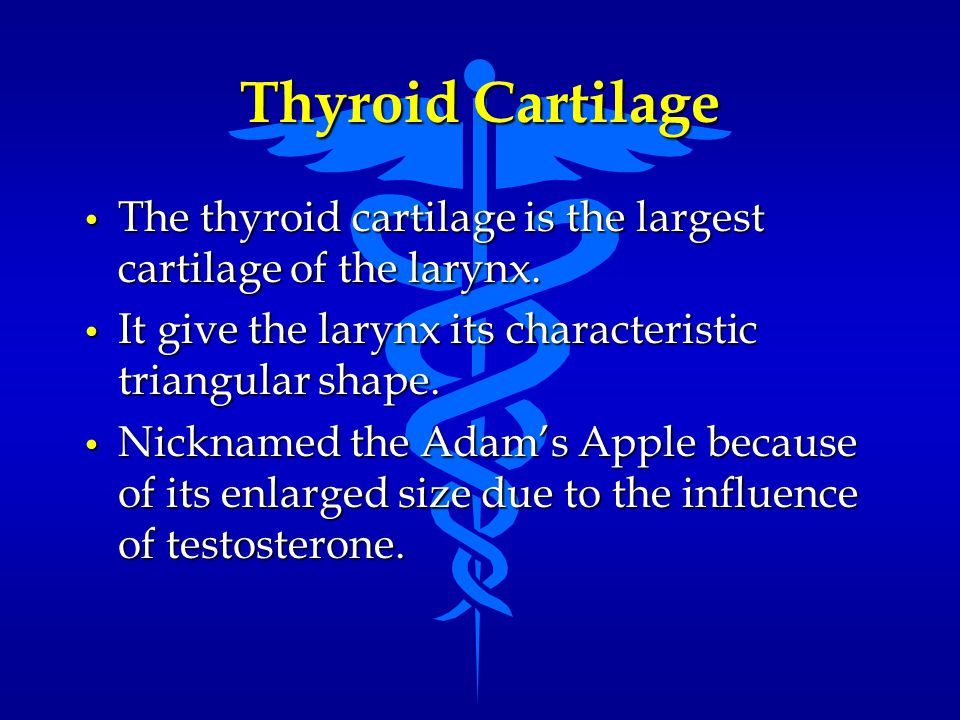 Thyroid Cartilage The thyroid cartilage is the largest cartilage of the larynx. It give the larynx its characteristic triangular shape.