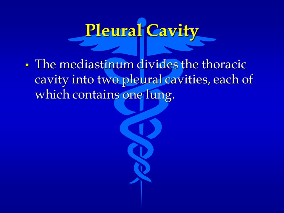 Pleural Cavity The mediastinum divides the thoracic cavity into two pleural cavities, each of which contains one lung.