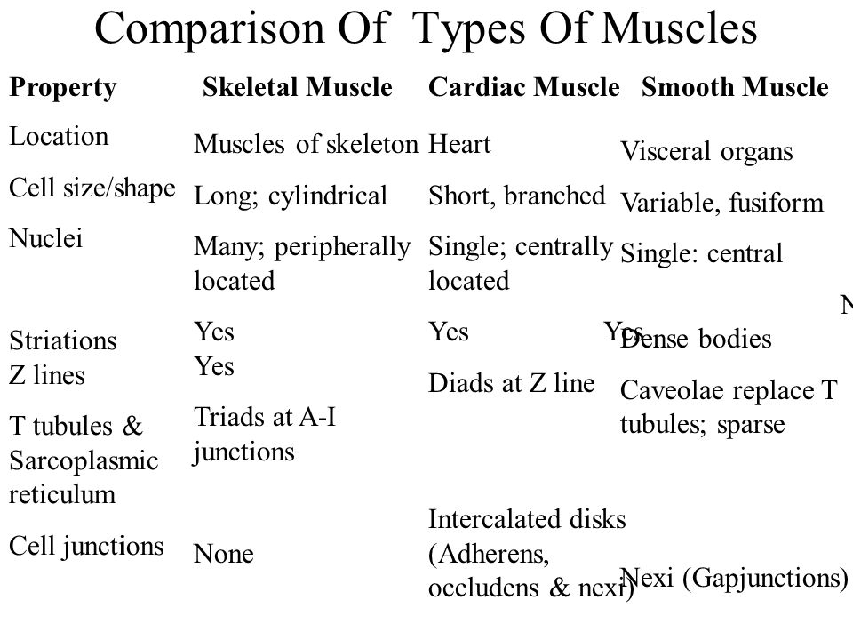 Comparison Of Types Of Muscles