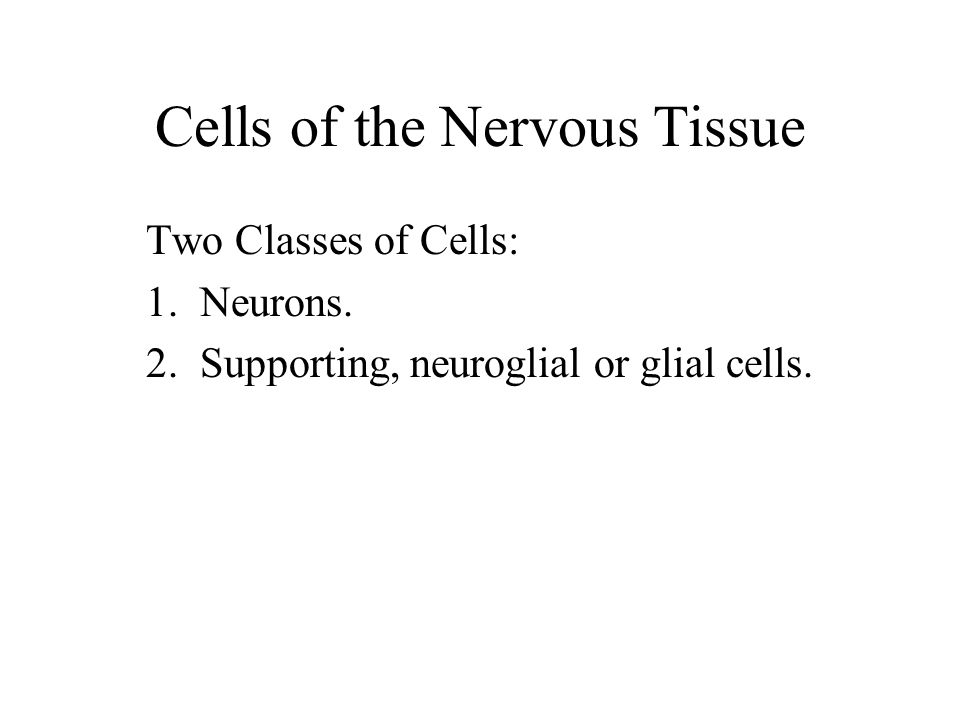 Cells of the Nervous Tissue