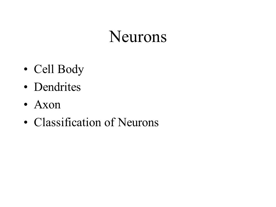 Neurons Cell Body Dendrites Axon Classification of Neurons