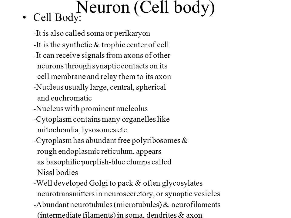 Neuron (Cell body) Cell Body: -It is also called soma or perikaryon