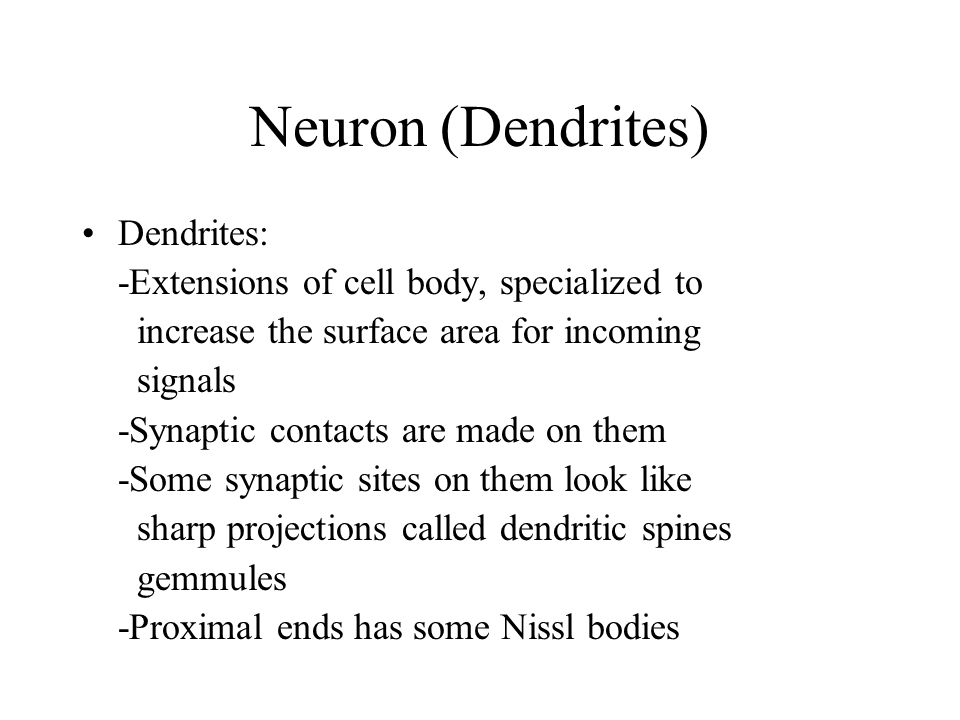 Neuron (Dendrites) Dendrites: -Extensions of cell body, specialized to