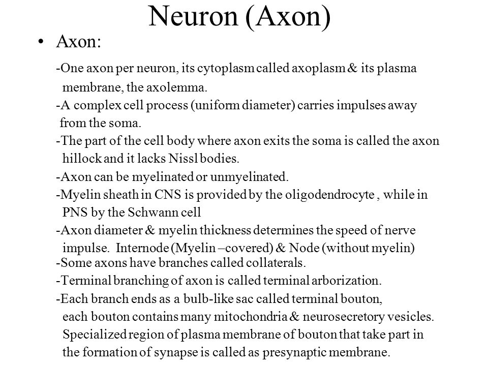 Neuron (Axon) Axon: -One axon per neuron, its cytoplasm called axoplasm & its plasma. membrane, the axolemma.
