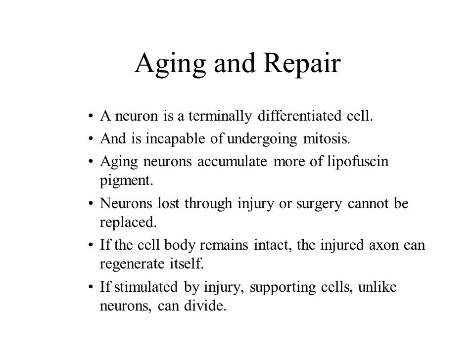 Aging and Repair A neuron is a terminally differentiated cell.