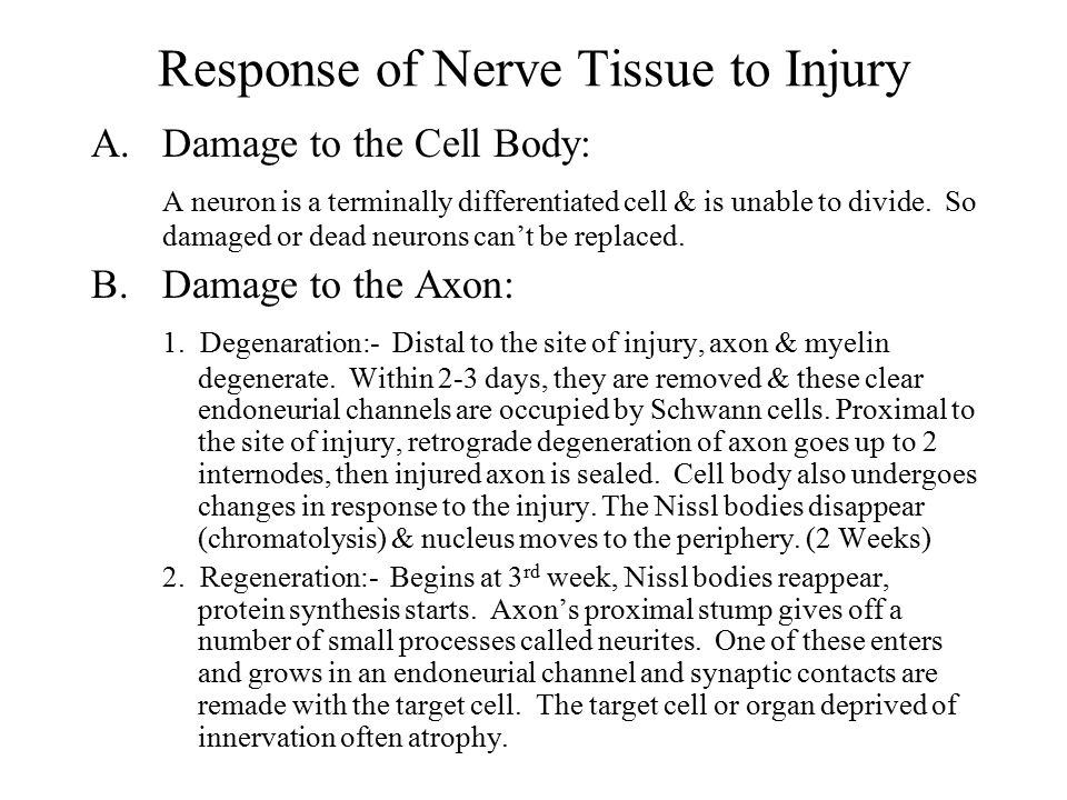 Response of Nerve Tissue to Injury