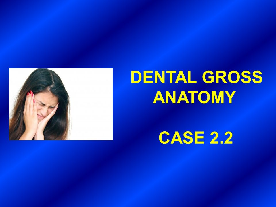 DENTAL GROSS ANATOMY CASE 2.2