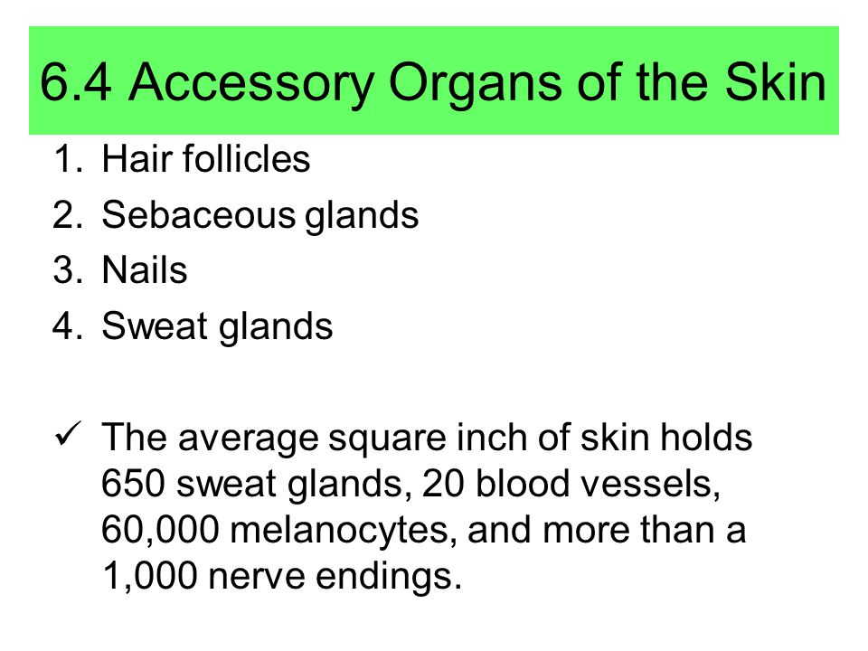 6.4 Accessory Organs of the Skin