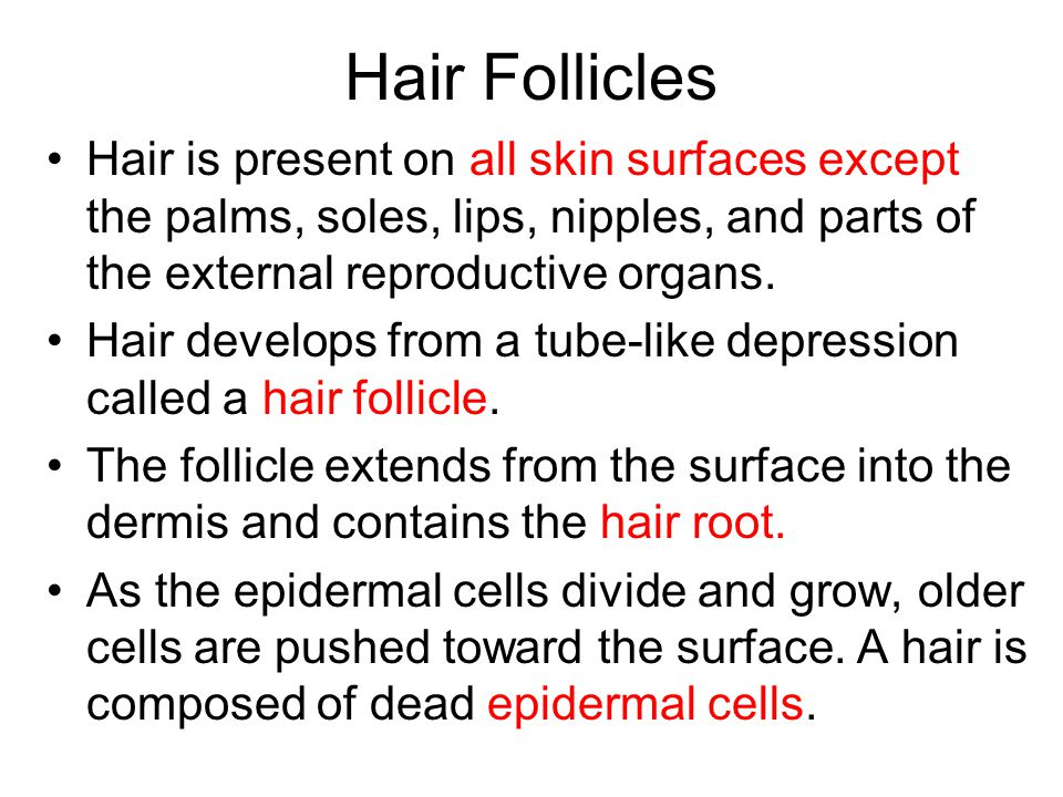 Hair Follicles Hair is present on all skin surfaces except the palms, soles, lips, nipples, and parts of the external reproductive organs.