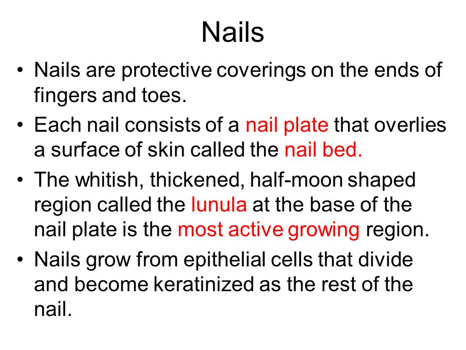 Nails Nails are protective coverings on the ends of fingers and toes.