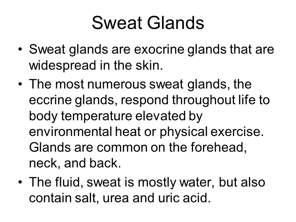 Sweat Glands Sweat glands are exocrine glands that are widespread in the skin.