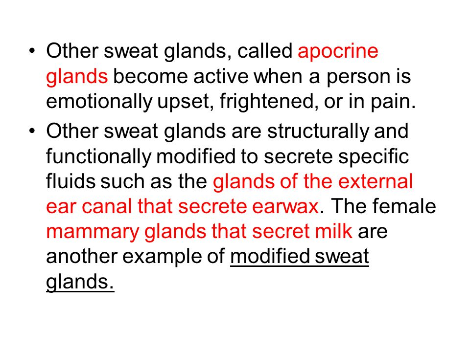 Other sweat glands, called apocrine glands become active when a person is emotionally upset, frightened, or in pain.
