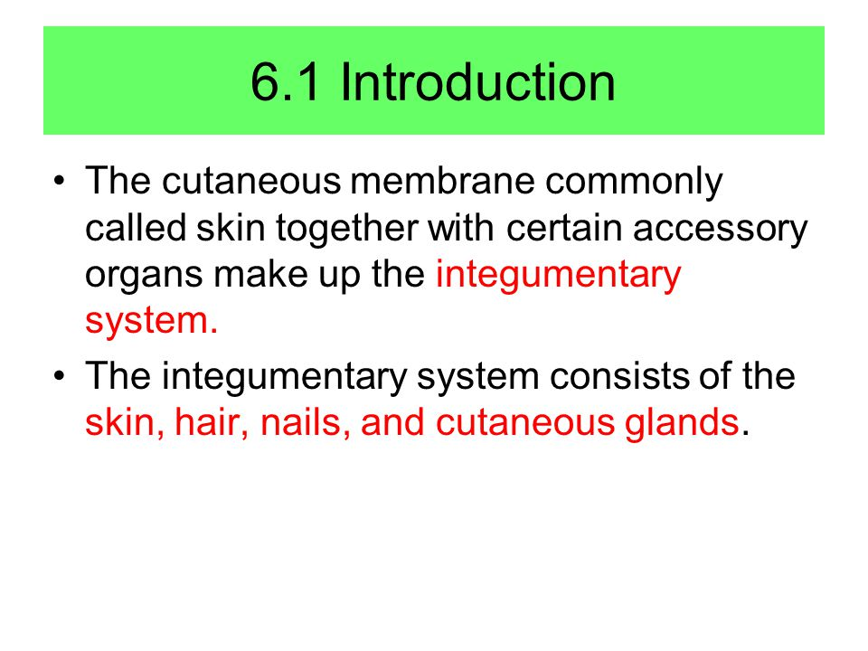 6.1 Introduction The cutaneous membrane commonly called skin together with certain accessory organs make up the integumentary system.