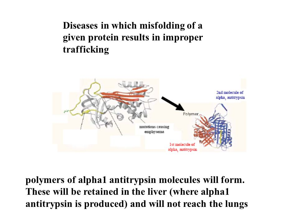 Diseases in which misfolding of a given protein results in improper trafficking