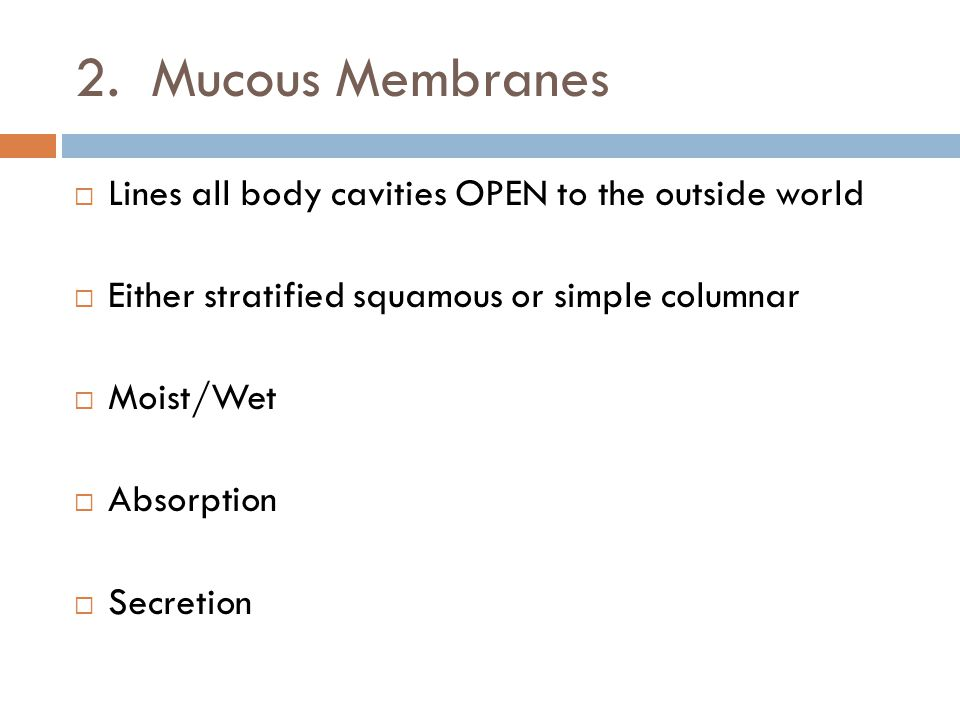 2. Mucous Membranes Lines all body cavities OPEN to the outside world