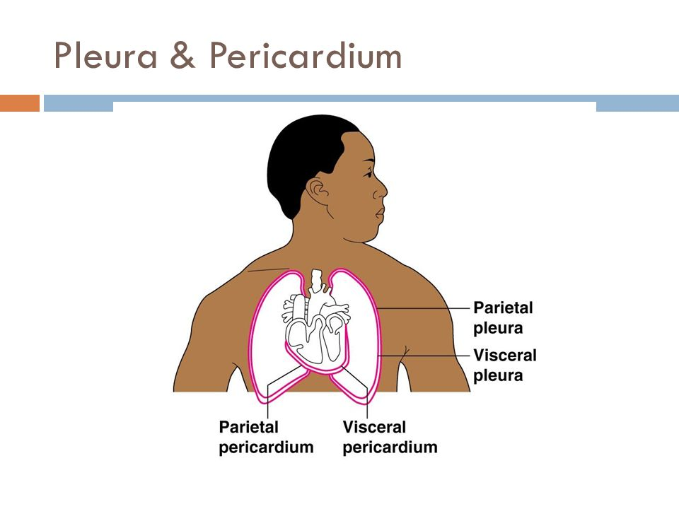 Pleura & Pericardium