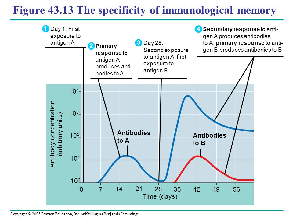 Figure 43.13 The specificity of immunological memory