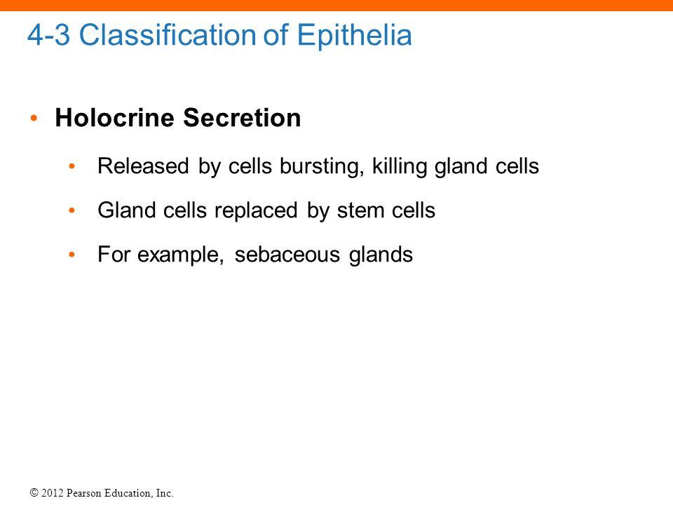 4-3 Classification of Epithelia