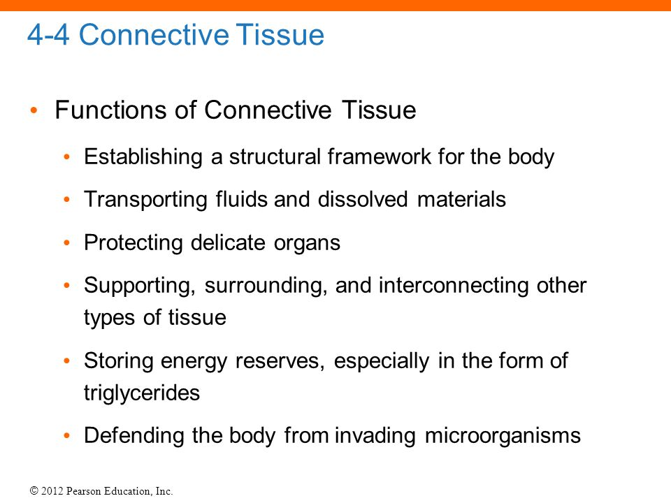 4-4 Connective Tissue Functions of Connective Tissue
