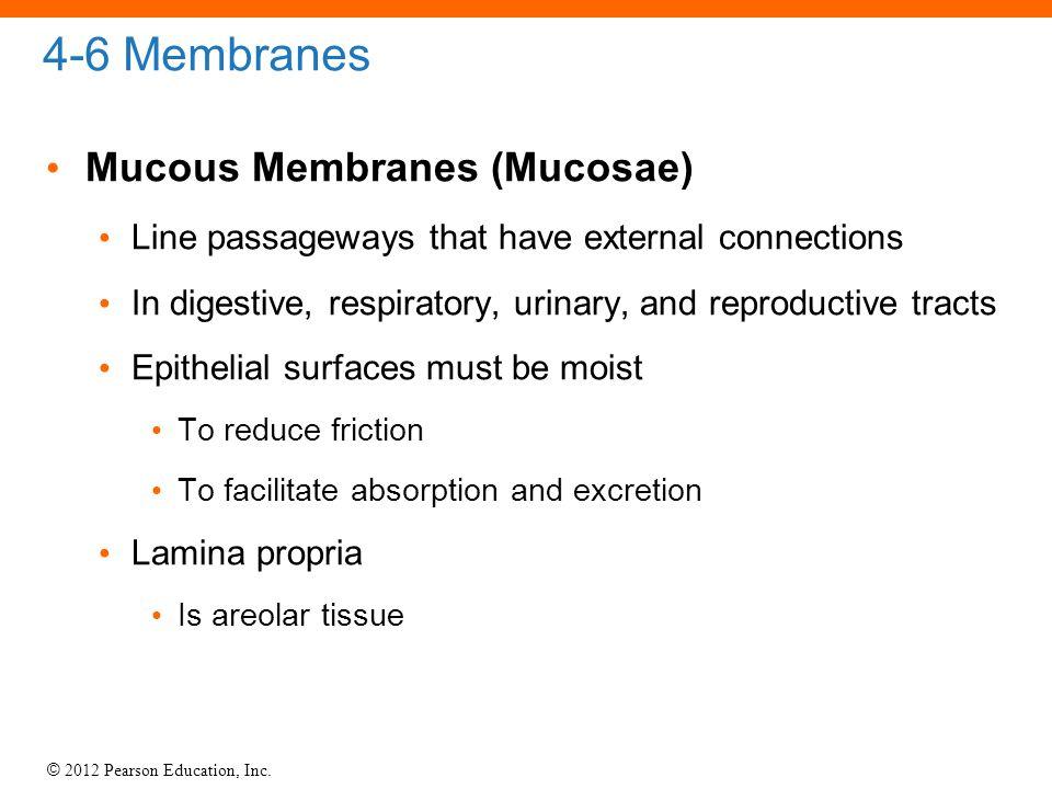 4-6 Membranes Mucous Membranes (Mucosae)