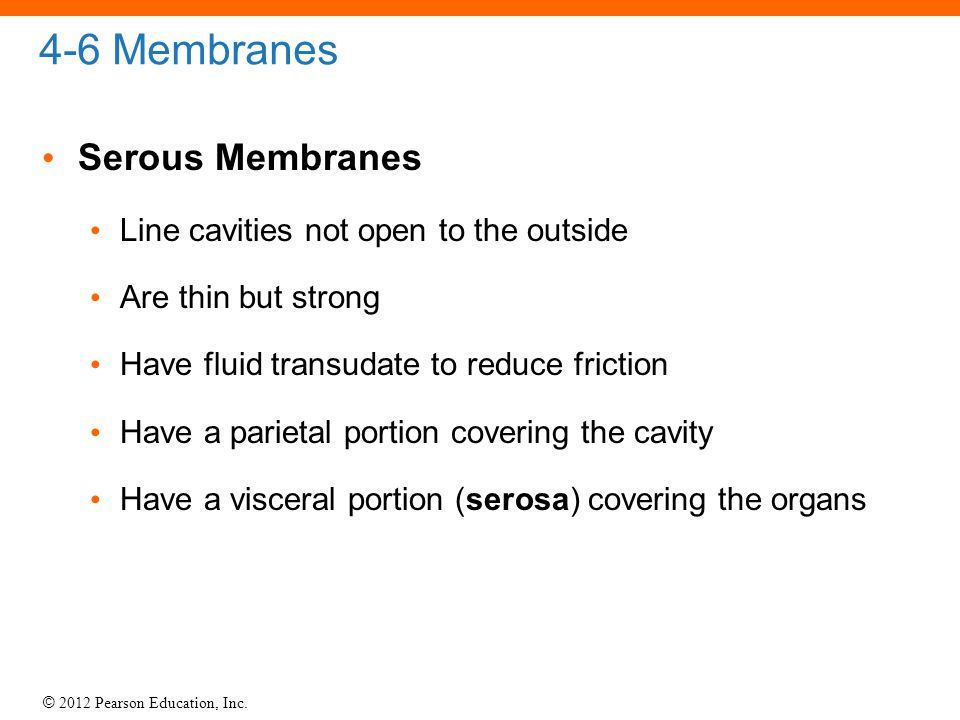 4-6 Membranes Serous Membranes Line cavities not open to the outside