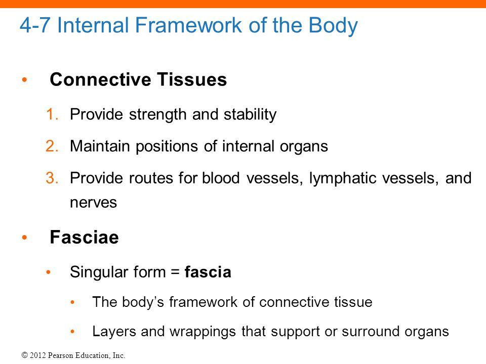 4-7 Internal Framework of the Body