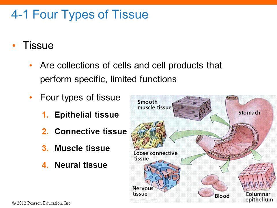 4-1 Four Types of Tissue Tissue