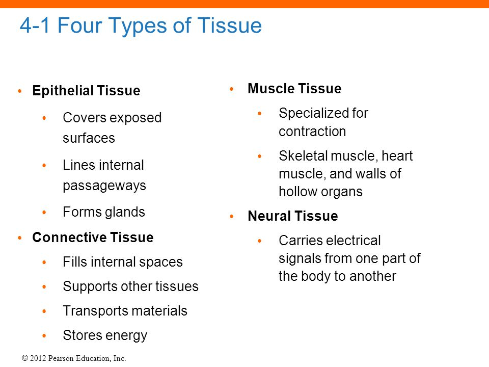 4-1 Four Types of Tissue Epithelial Tissue Covers exposed surfaces