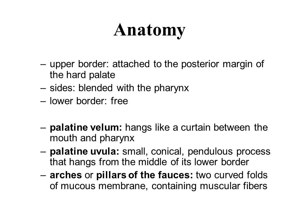 Anatomy upper border: attached to the posterior margin of the hard palate. sides: blended with the pharynx.