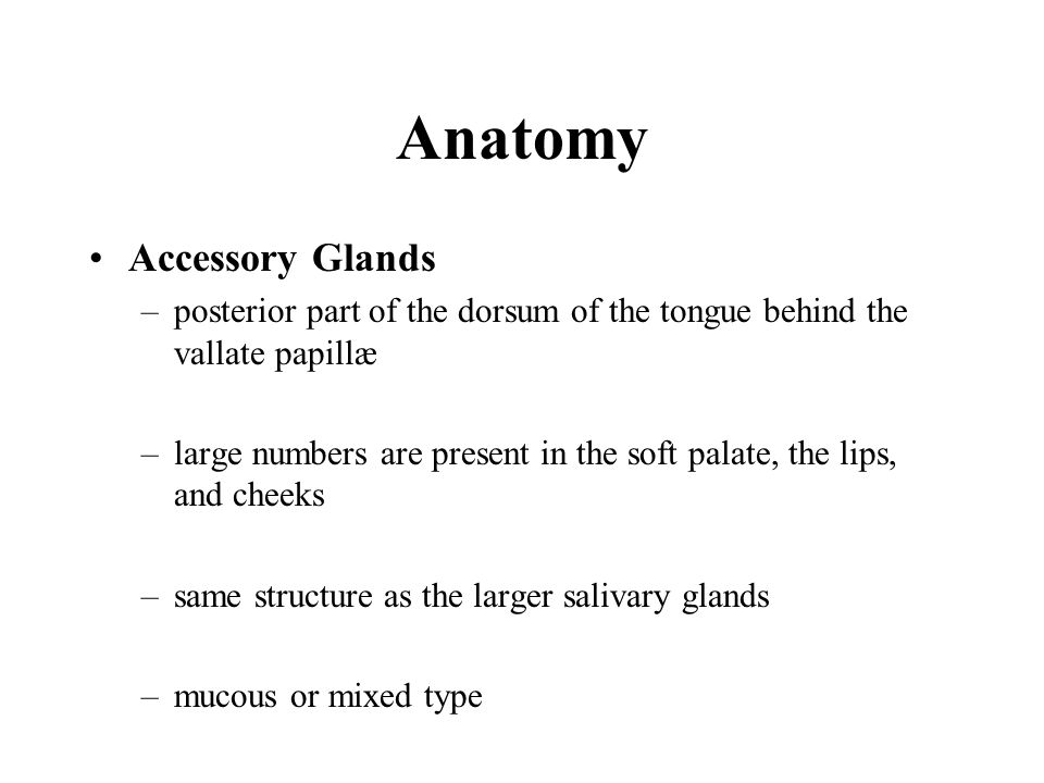 Anatomy Accessory Glands