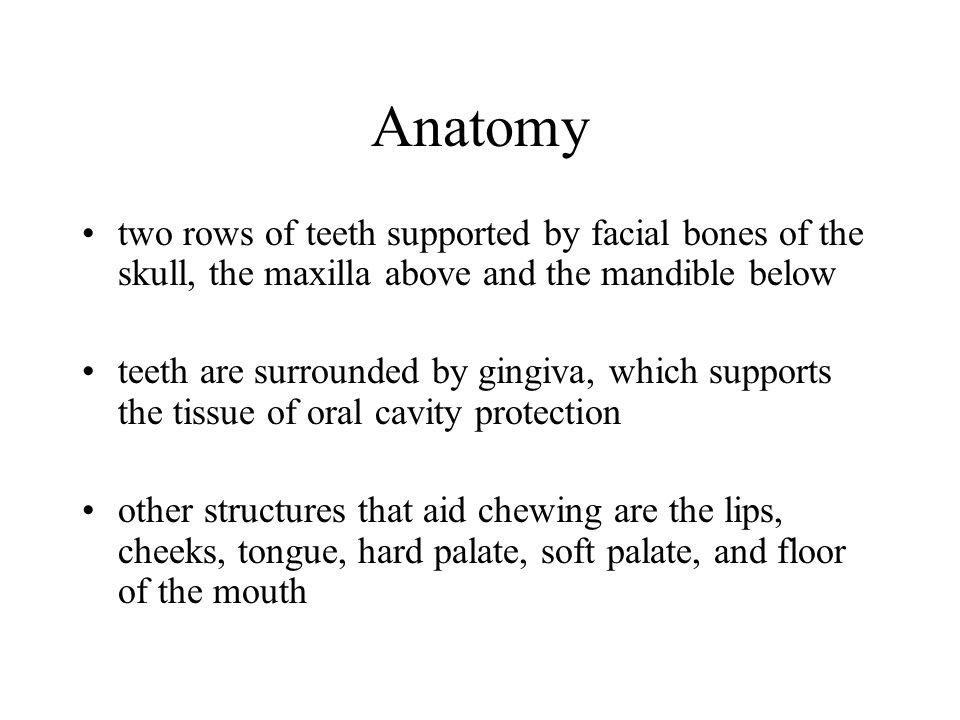 Anatomy two rows of teeth supported by facial bones of the skull, the maxilla above and the mandible below.