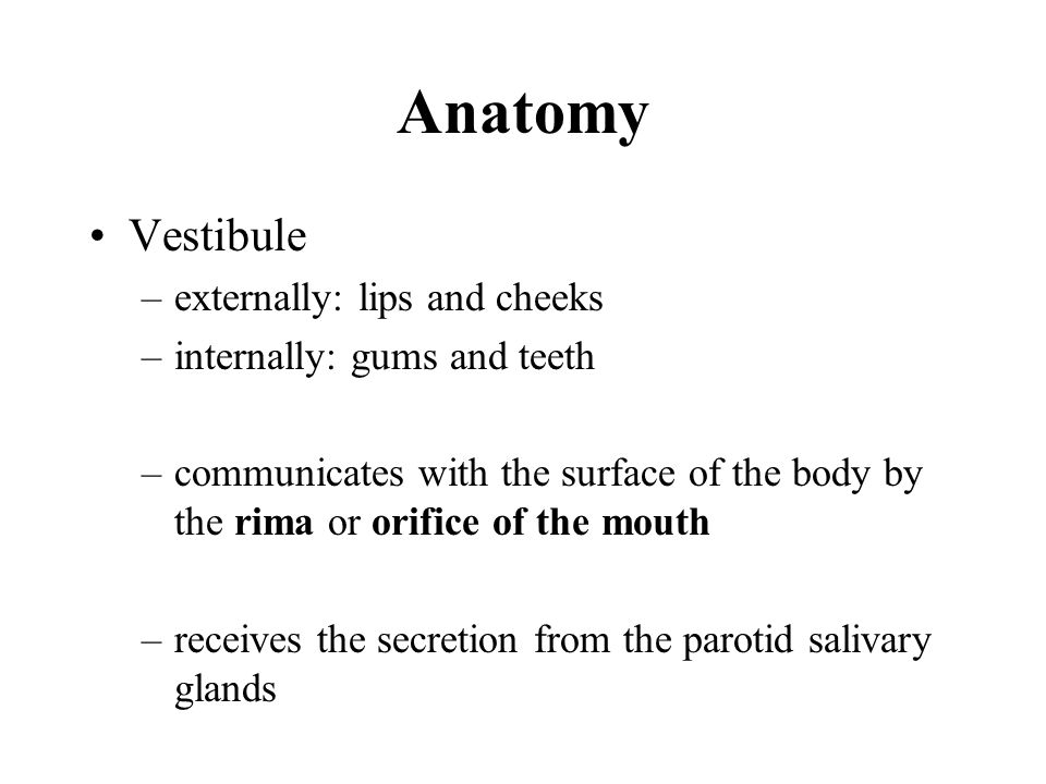 Anatomy Vestibule externally: lips and cheeks