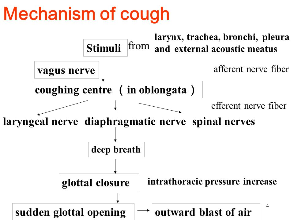 Mechanism of cough from Stimuli vagus nerve