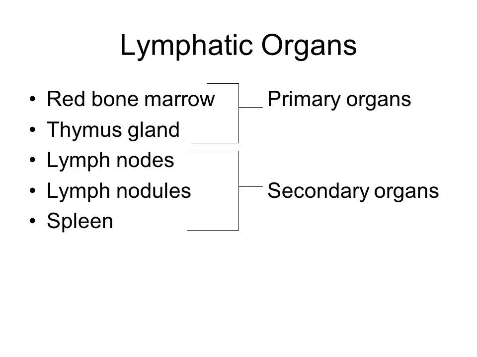 Lymphatic Organs Red bone marrow Primary organs Thymus gland