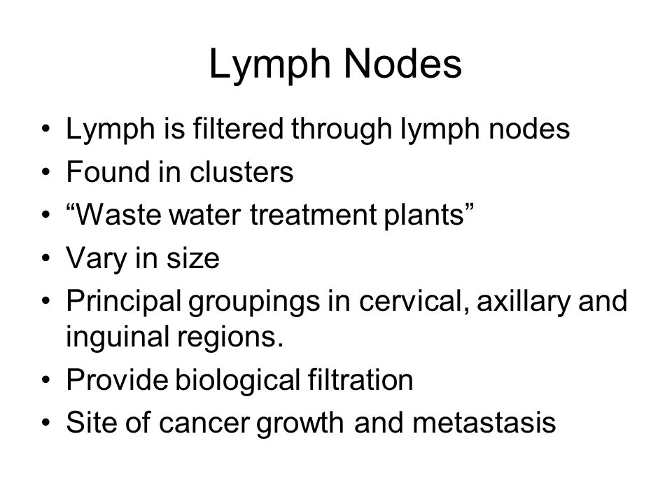 Lymph Nodes Lymph is filtered through lymph nodes Found in clusters