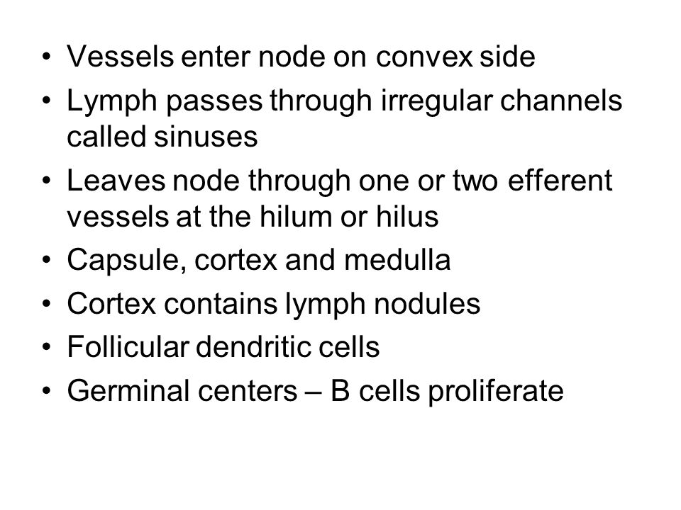 Vessels enter node on convex side