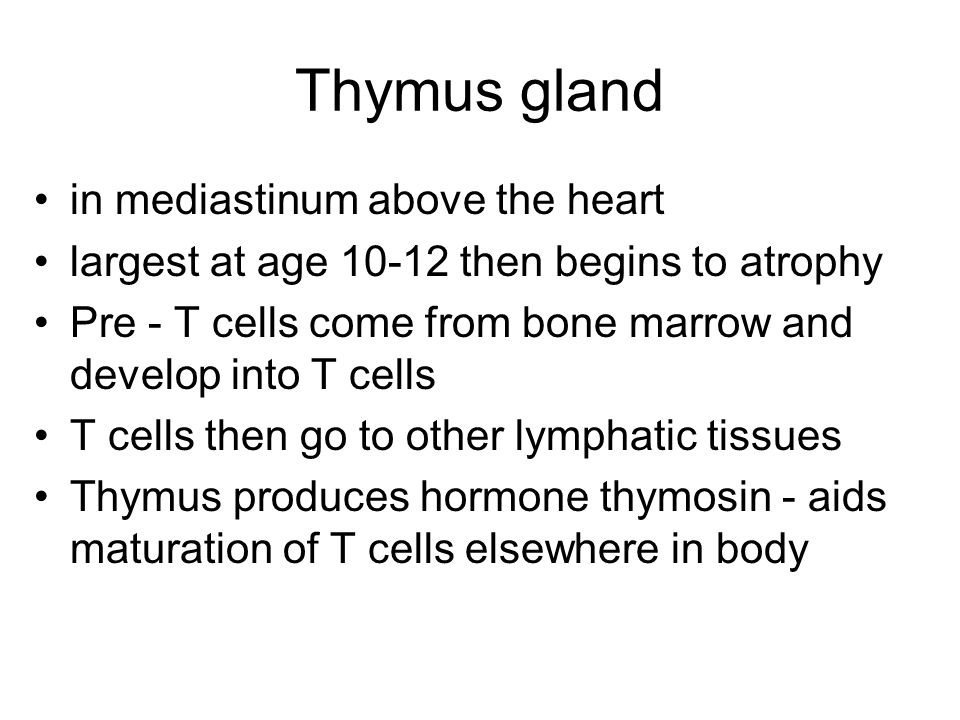 Thymus gland in mediastinum above the heart