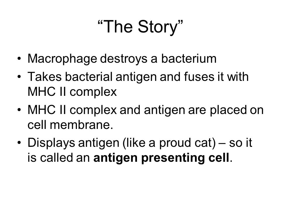 The Story Macrophage destroys a bacterium