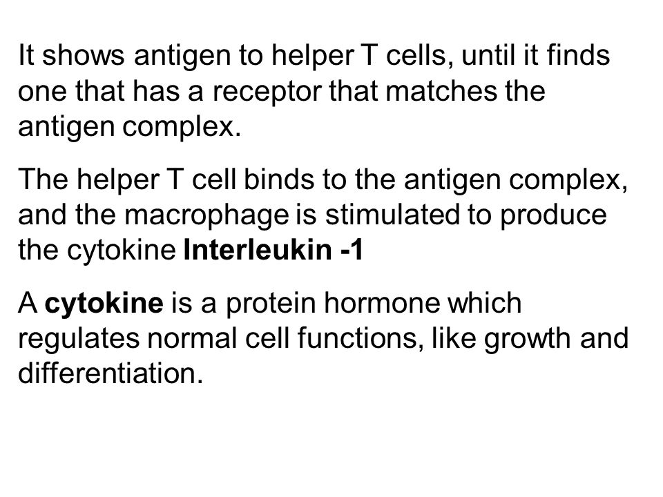 It shows antigen to helper T cells, until it finds one that has a receptor that matches the antigen complex.