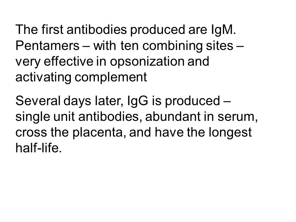 The first antibodies produced are IgM
