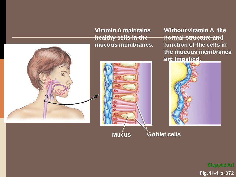 Vitamin A maintains healthy cells in the mucous membranes.