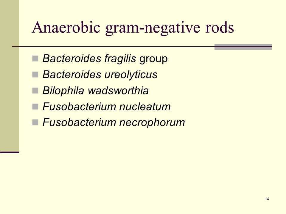 Anaerobic gram-negative rods