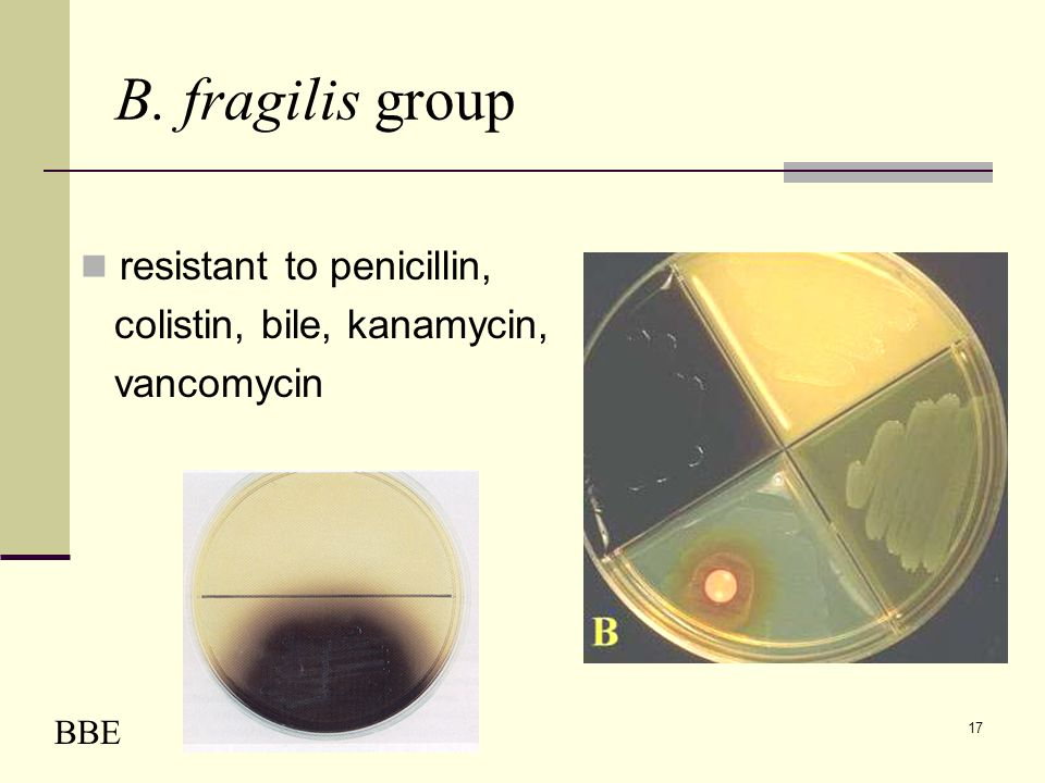 B. fragilis group resistant to penicillin, colistin, bile, kanamycin,