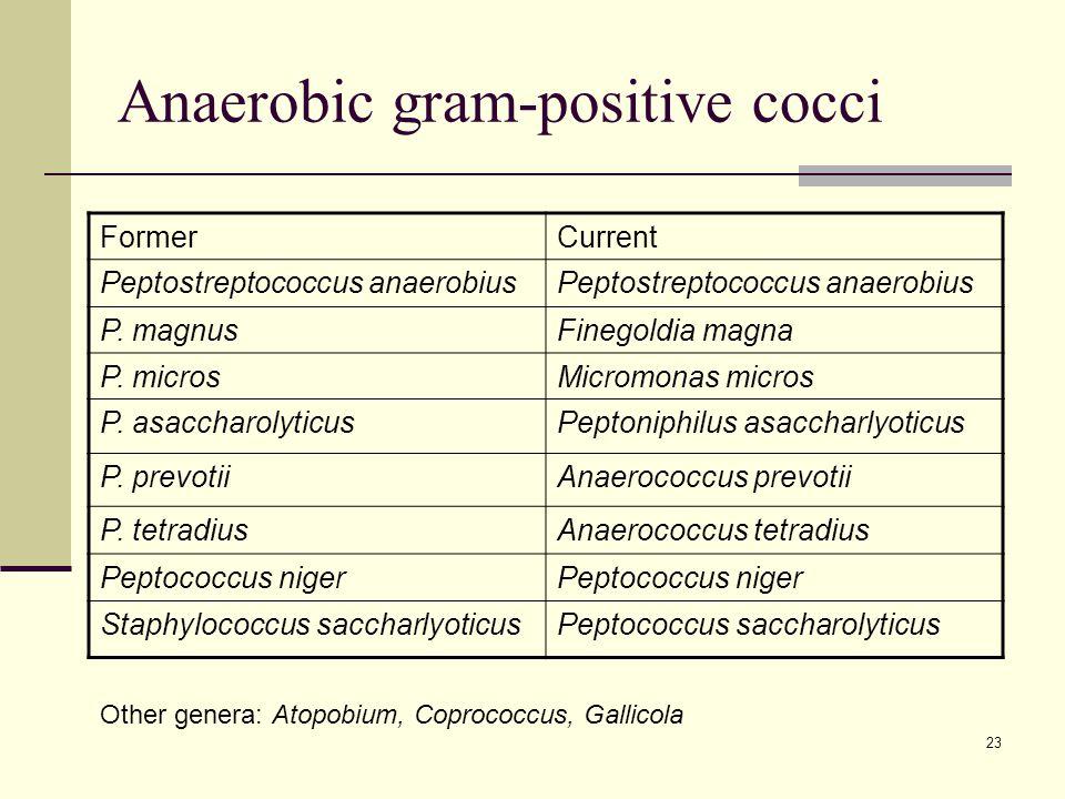 Anaerobic gram-positive cocci