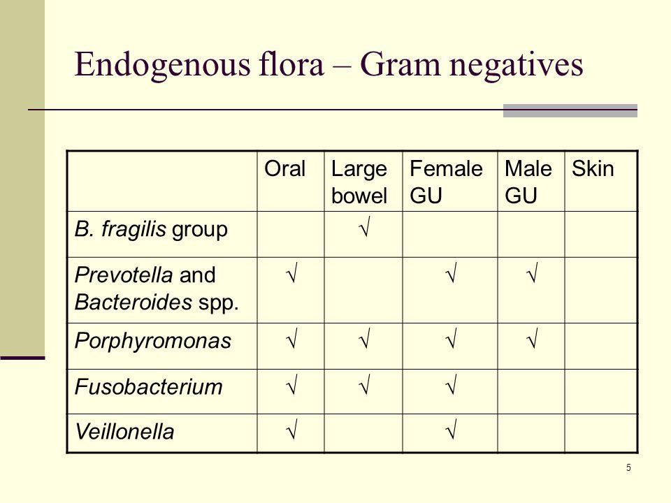 Endogenous flora – Gram negatives