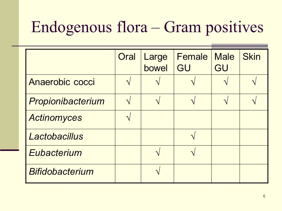 Endogenous flora – Gram positives